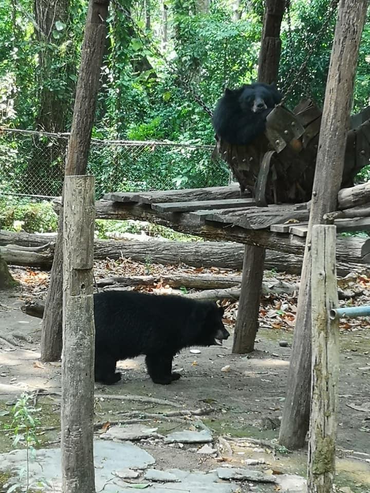 ศูนย์อนุรักษ์หมี แหล่งรวบรวมหมีจากการช่วยเหลือจากการค้าสัตว์ป่าในสถานที่ต่าง ๆ ค่าเข้าชมน้ำตกกวางสีส่วนหนึ่งก็เพื่อนำมาอนุรักษ์บำรุงหมี