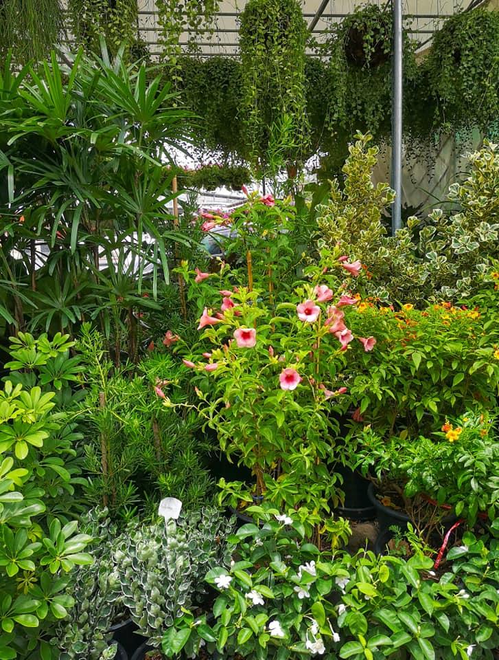 ไม้ดอกไม้ประดับหลากหลาย