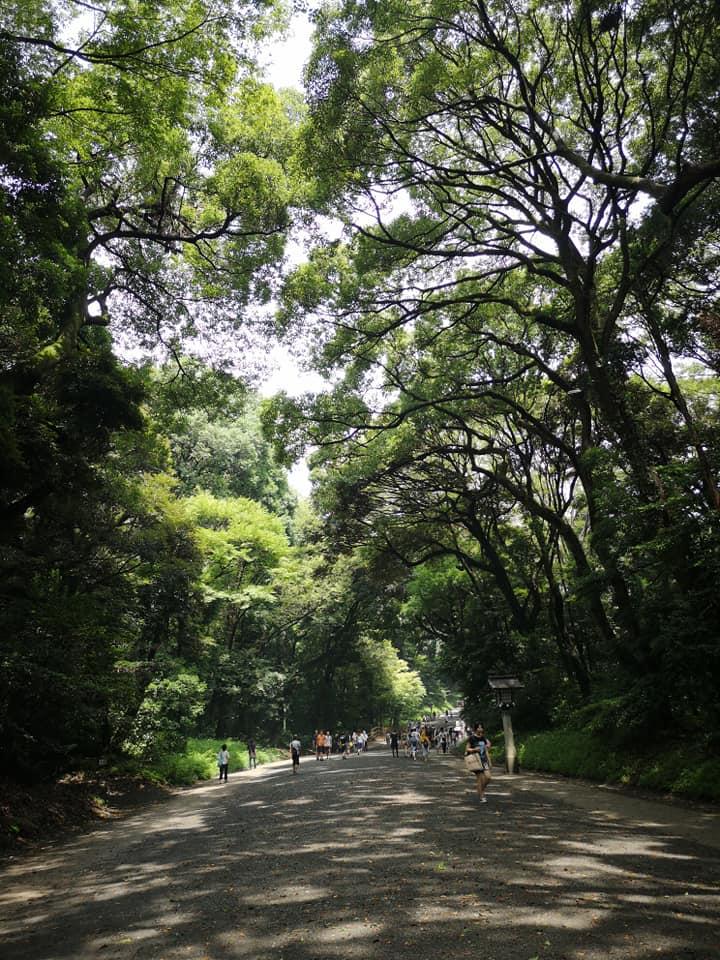 ทางเดินเข้าศาลเจ้าเมจิ Meiji Shrine Tokyo Japan ร่มรื่นด้วยต้นไม้