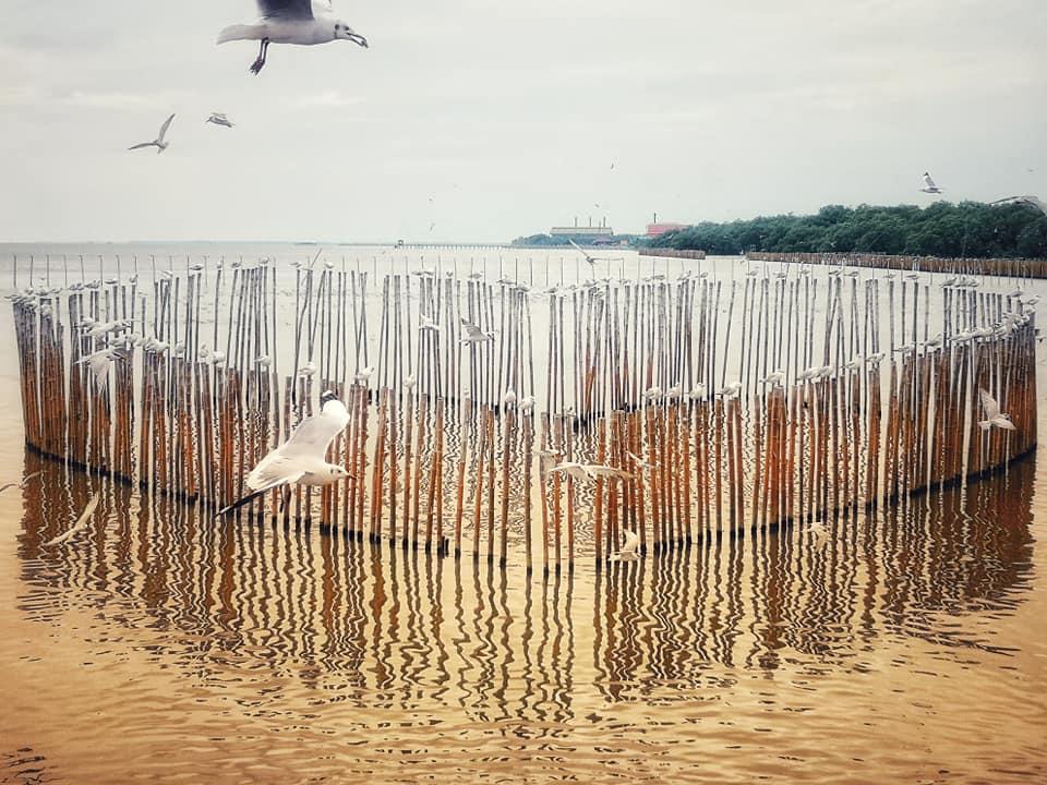 จุดพักสำหรับนกไว้เกาะพัก รูปหัวใจ