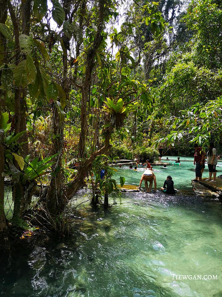 ป่าต้นน้ำบ้านน้ำราด บริเวณโดยรอบร่มรื่นด้วยต้นไม้