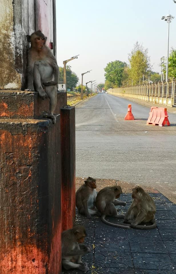 ลิง สัญลักษณ์เมืองลพบุรี