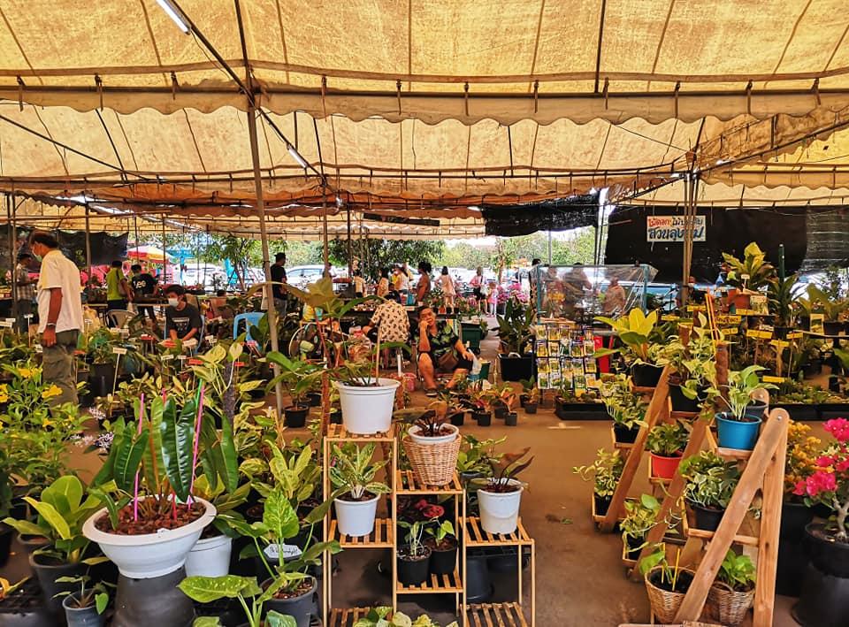 โซนขายต้นไม้ ที่ตลาดน้ำบางน้ำผึ้ง